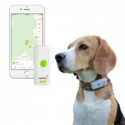 BALISE GPS CHIEN